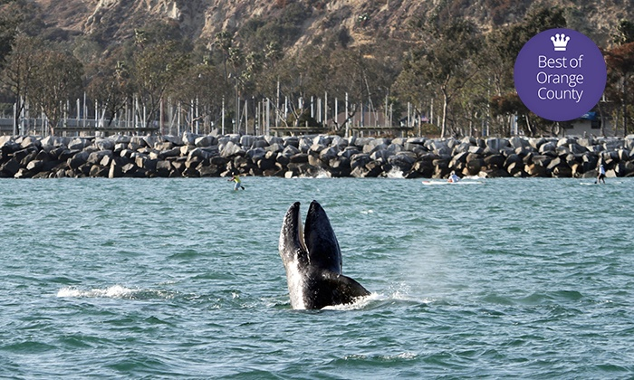 Dana Wharf Whale Watching - Dana Point: Dana Point Festival of Whales Cruise for One Adult or Child with Optional Book (Up to 61% Off)