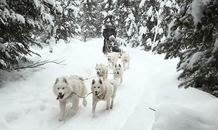 Aventures Nord-Bec Stoneham - Stoneham-et-Tewkesbury: Activity or 90-Minute Dogsledding Package at Aventures Nord-Bec Stoneham (Up to 50% Off)