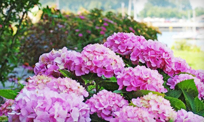 Elbers Landscape Service - Starin Central: $15 for $30 Worth of Plants and Garden Supplies at Elbers Landscape Service