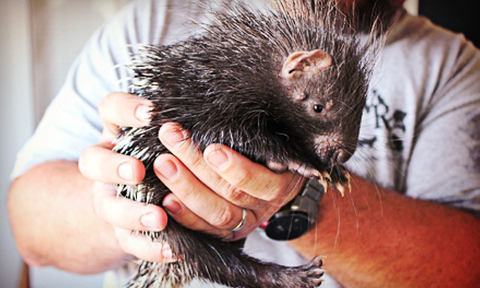 Experience Wyman - Eureka: $99 for an In-Home Animal Show from the Wyman Center ($200 Value)