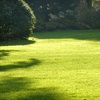 Up to 56% Off Lawn-Care Services
