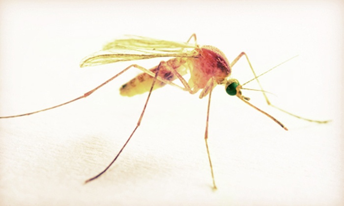 Keep it Green by Grounds Keeper, Inc. - Milwaukee: Mosquito, Tick, and Flea Control for a Yard Up to 1 Acre from Keep it Green by Grounds Keeper, Inc. (Up to 76% Off)