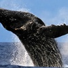 30% Off Whale-Watching Tours from Lava Ocean Tours