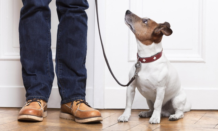 On the Go Pet Services - Providence: Two Dog Walks from On the Go Pet Services (25% Off)
