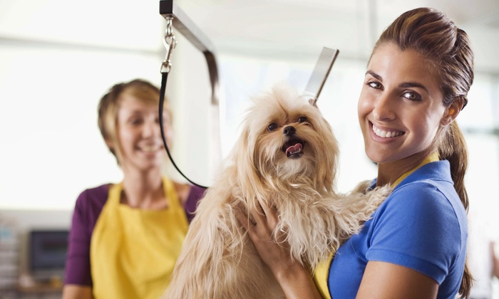 Purple Palace Pet Salon - Norcross: Grooming Services from Purple Palace Pet Salon (50% Off)