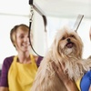 Up to 56% Off Pet Grooming and Day Care