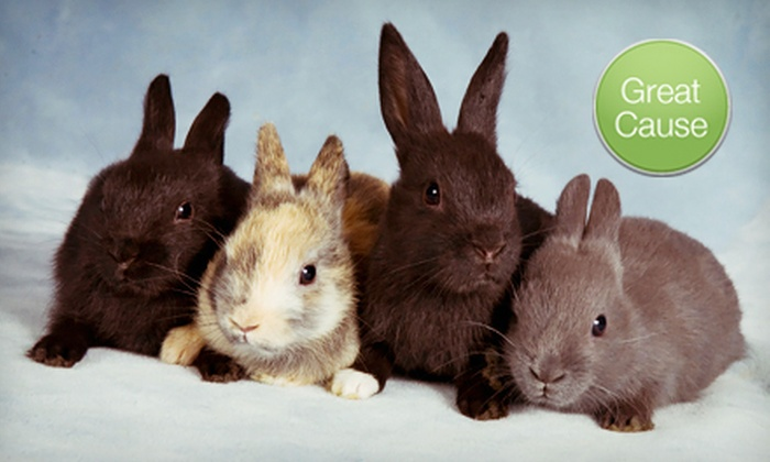 Red Door Animal Shelter: $10 Donation for Medical Care for Rescued Rabbits