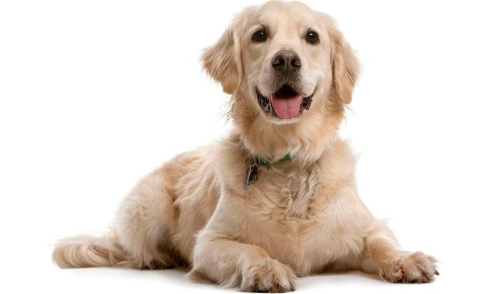 Sacramento Pet Resort & Spa - Southeastern Sacramento: Two Days of Pet Boarding at Sacramento Pet Resort & Spa (20% Off)
