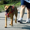 Up to 60% Off Dog Training in Shelby Township