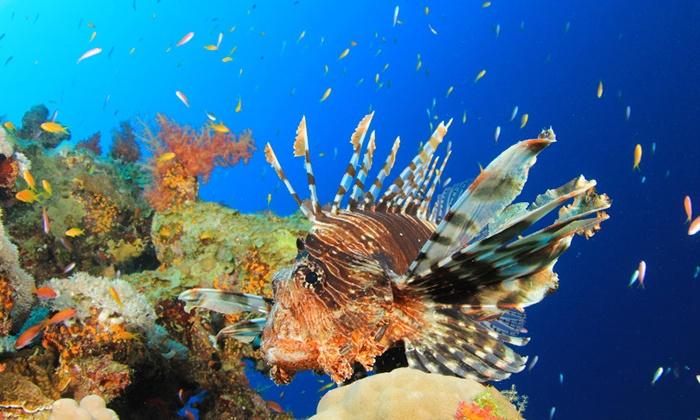 Entr es l 39 aquarium de paris aquarium de paris groupon for Vendeur aquarium