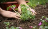 Arnold Farms - Arnold: $25 for $50 Worth of Plants, Tools, and Outdoor Accessories or Landscape Consultation at Arnold Farms (Up to 67% Off)