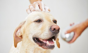 Acquapet: Lavaggio self service di 40 minuti a 9,99 € per cani o gatti