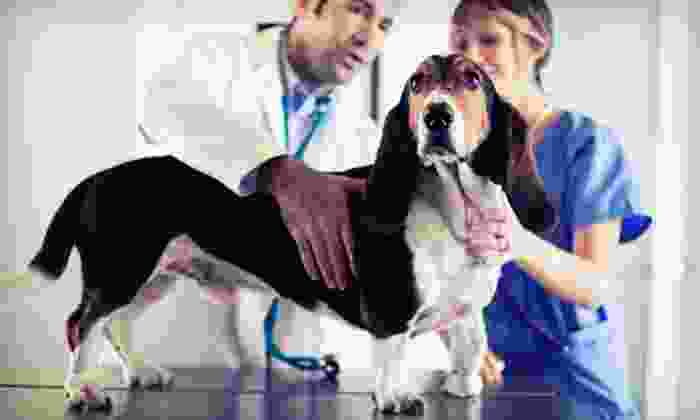 VIP PetCare - Columbus: Pet Microchip, Indoor Adult-Cat Care Package, or Adult-Dog Care Package from VIP PetCare (Up to 62% Off)