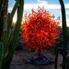 Desert Botanical Garden – Chihuly in the Garden Sculpture Exhibit