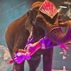 Jordan World Circus – Up to 53% Off Show