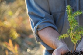 nice cuts landscaping: $36 for $45 Worth of Services — nice cuts landscape