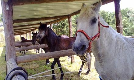Paseo a caballo para dos personas por Talamanca o con comida