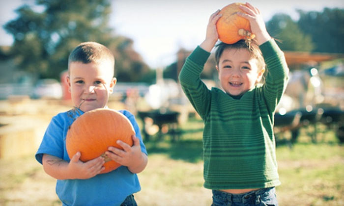 McClelland's Dairy Pumpkin Patch - Southwest Santa Rosa: $10 for $20 Worth of Pick-Your-Own Pumpkins at McClelland's Dairy Pumpkin Patch