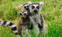 Family Pass for Two Adults and Up to Three Children to Kirkley Hall Zoological Gardens (41% Off)