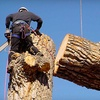 Up to 67% Off Tree Services from Urban Forest Pro