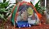 Kids' Outdoor Adventure Kit and Shrek Tent: Kids' Outdoor Adventure Kit and Shrek Tent. Free Returns.
