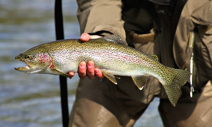 Burd's Family Fishing - Stouffville: Trout Fishing Including Rod Rental and Fish for Two, Four, or Six People at Burd's Family Fishing (Up to 51% Off)