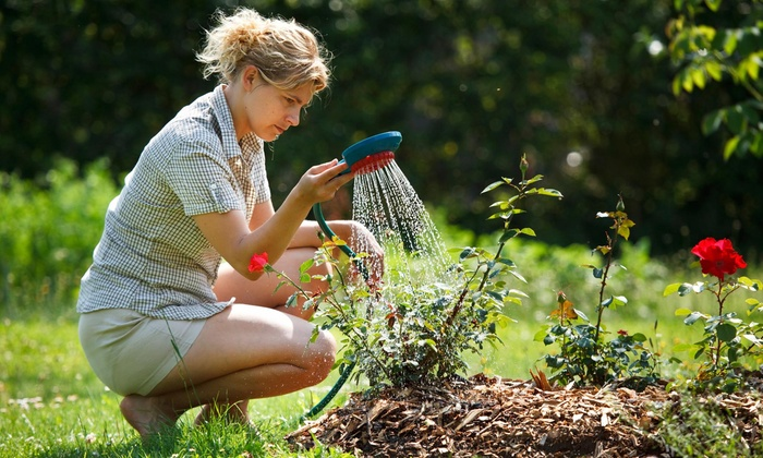 Hammer's Consultant Service Llc - Memphis: $58 for $100 Worth of Lawn and Garden Care — Hammer's Consultants Service