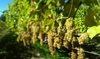 Up to 58% Off at Running Brook Vineyards & Winery