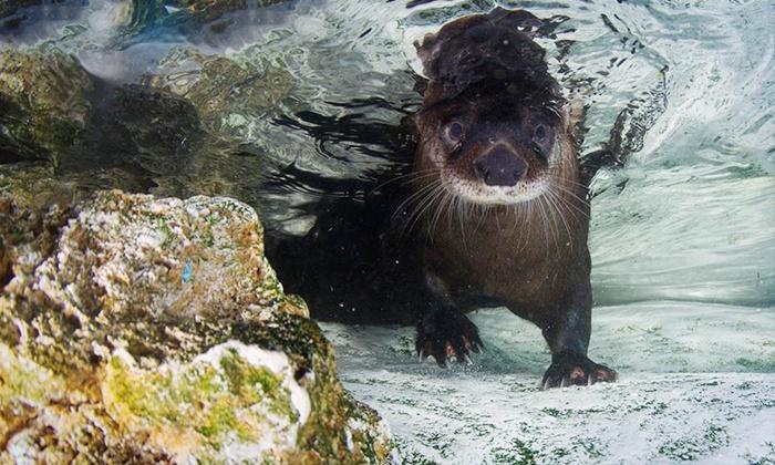 Clearwater aquarium coupons 2019