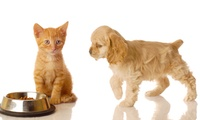 Accredited Pet Nutrition Online Course with Holly and Hugo (89% Off)
