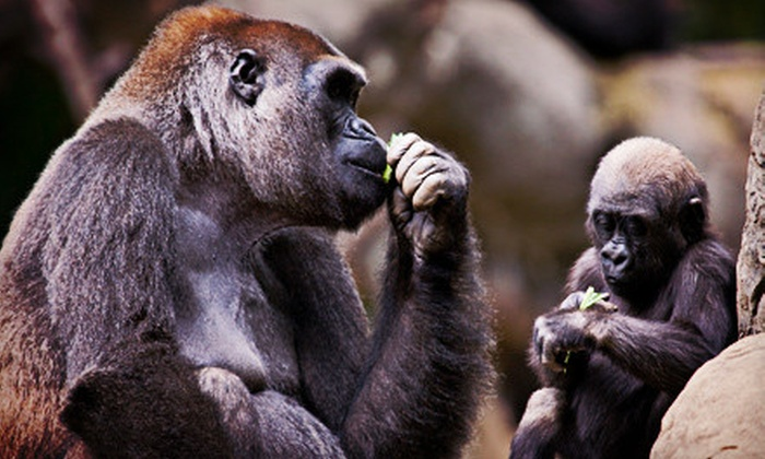 Zoo Atlanta - Montgomery: $20 for a Visit to Zoo Atlanta for Two (Up to $43.98 Value)