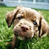 Up to 60% Off Dog-Waste Removal