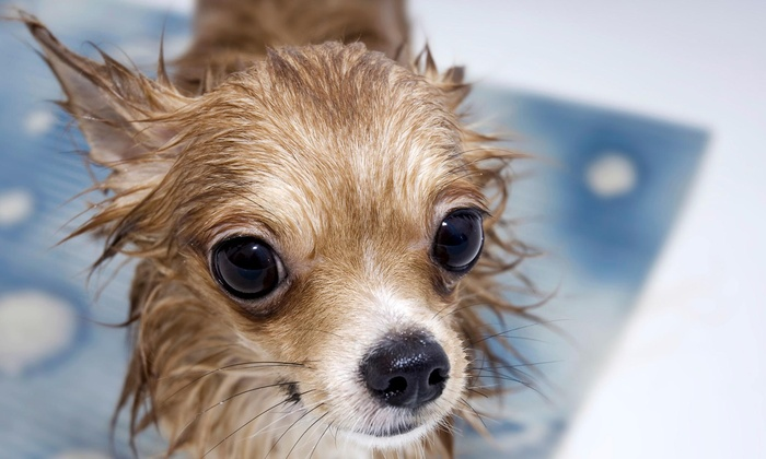 Dirty Dog Day Spa - Regal Center: Bath for Dog Weighing Up to 20 Pounds, 21–50 Pounds, or 51 or More Pounds at Dirty Dog Day Spa (Up to 58% Off)