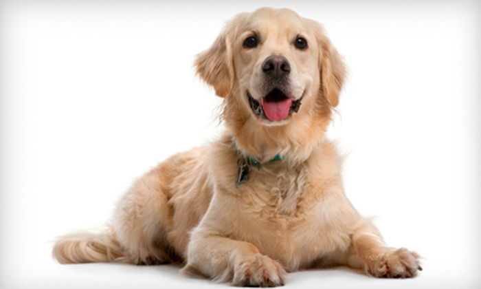 Barks N Recreation - Utica: One, Three, or Five Days of Doggie Day Camp at Barks N Recreation (Up to 55% Off)