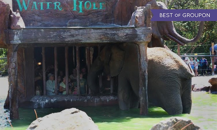 Wildlife Safari Encounters - Wildlife Safari: Elephant Waterhole Tour or Elebubbles Elephant Bath Encounter at Wildlife Safari (Up to 50% Off)