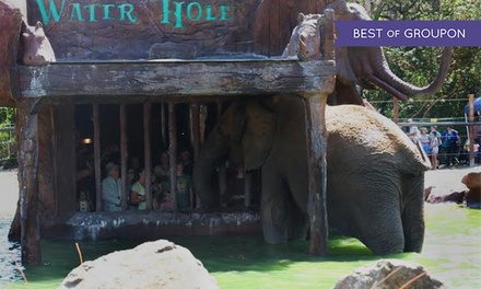 Elephant Waterhole Tour or Elebubbles Elephant Bath Encounter at Wildlife Safari (Up to 50% Off)