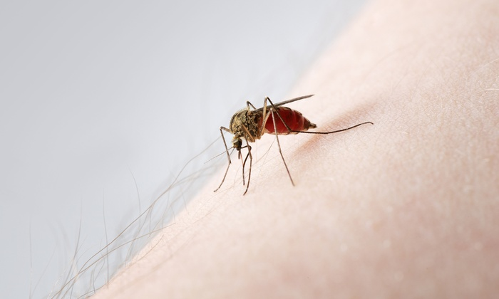 Mosquito Moe's - Atlanta: Mosquito Barrier Treatment for a Half or Full Acre from Mosquito Moe's (Up to 61% Off)