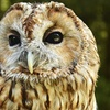 Two-Hour Owl Handling Experience