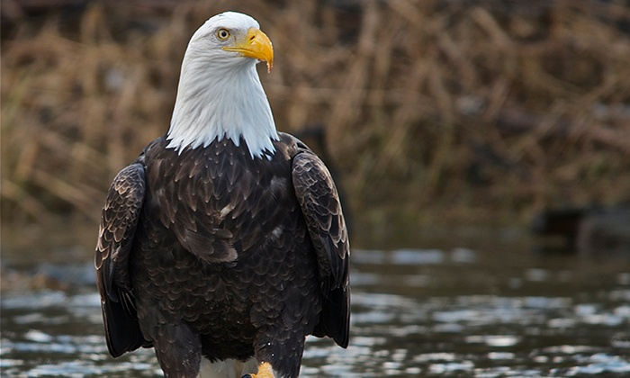 Triad River Tours - Triad River Tours: Three-Hour Bald Eagle Watching River-Rafting Tour for One, Two, Four or Six at Triad River Tours (Up to 57% Off)