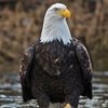 Up to 55% Off Bald Eagle Watching Tour