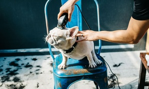 Castle Pet's Salon: Basic Shower, Haircut or Grooming Service for Up to Three Pets at Castle Pet's Salon (Up to 76% Off)
