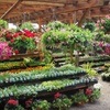 Up to 60% Off Plants and Greenery at Loen Nursery