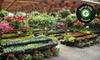 Loen Nursery - Sherwood - Tualatin North: 5-Gallon Japanese Maple Tree or $19 for $40 Worth of Plants and Greenery from Loen Nursery Garden Center