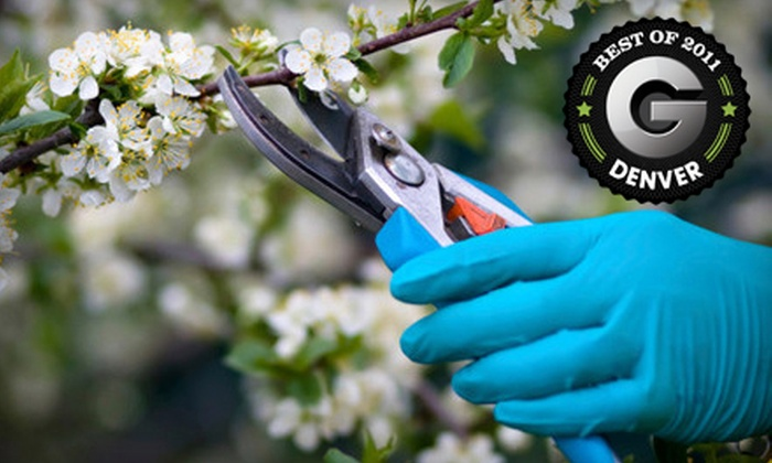 Timberline Gardens - Allendale Area: $20 for $40 Worth of Plants and Garden Supplies at Timberline Gardens in Arvada