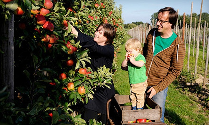 Clearview Orchards - Aptos Hills-Larkin Valley: $10 for 10 Pounds of Organic Fuji Apples ($15 Value)