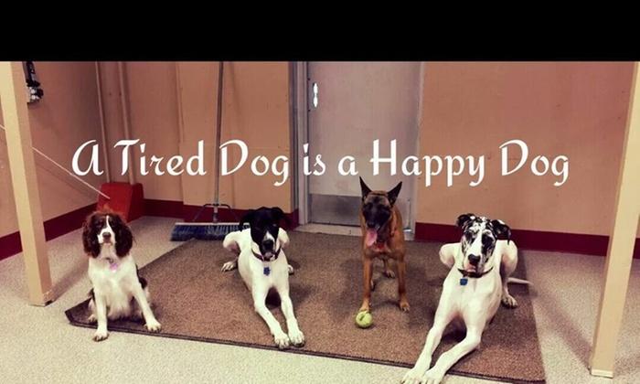 Doggie Dog World - Abbott Loop: Up to 56% Off Doggie Day Care at Doggie Dog World