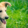 Up to 71% Off Dog Boarding and Daycare