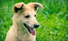 WoofGang Doggy Day Care - Northeast Carrollton: Three or Five Nights of Dog Boarding or 10 Doggy Daycare Visits at WoofGang Doggy Day Care (Up to 71% Off)