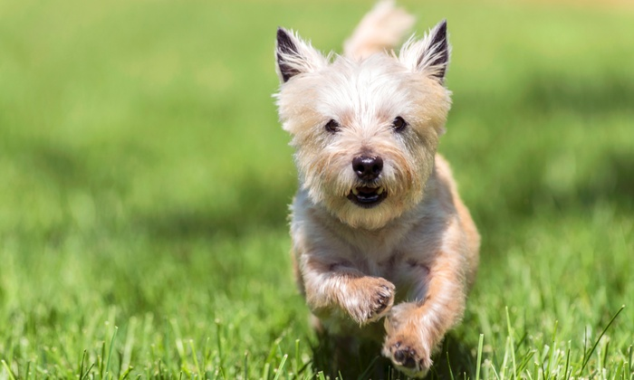 Dog Daycare or Dog Boarding for One or Two Dogs at Shady Acres Pet Ranch (Up to 48% Off). Five Options Available.
