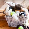 53% Off Pet Supplies from Need Some Sun